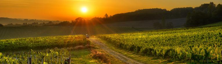 Buy wines from South-West, France