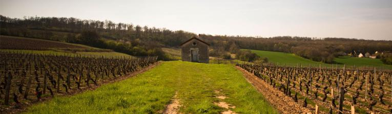Buy wines from Beaujolais and Lyonnais, France
