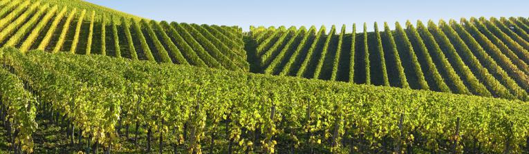 Buy wines from Champagne, France