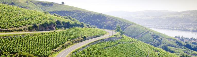 Buy wines from Rhone Valley, France