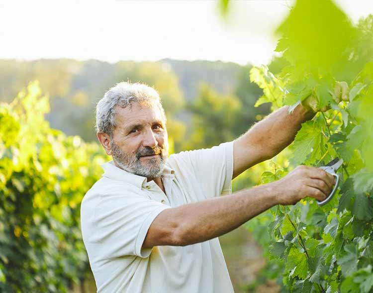 winemaker in the fields